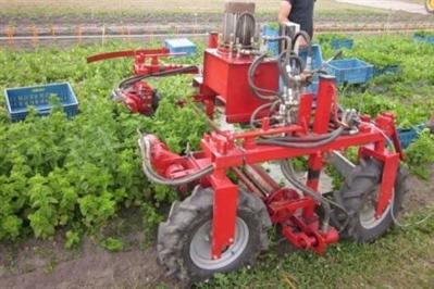 Munt oogstmachine: Thierry Beaucarne