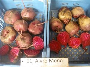 Alvro Mono (Vitalis)