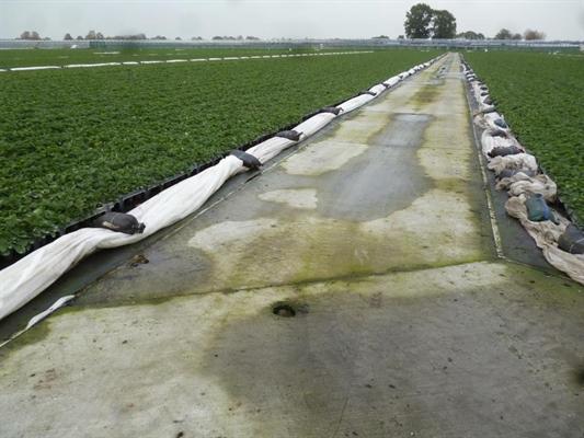 Op het trayveld wordt alle drainwater opgevangen door middel van afvoerbuizen onder de holle betonpaden