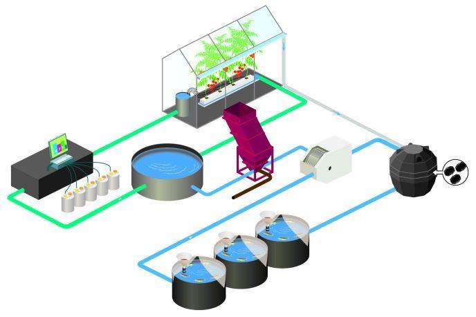 Schematische voorstelling van het aquaponicssysteem