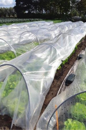 Minitunnel uit PVC buizen en klemmen om de plastiek vast te houden en van verluchting te voorzien.